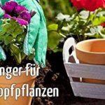 engrais pelouse npk TOP 9 image 3 produit