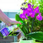 FERTILIGENE Soin Hydratant Orchidees de la marque FERTILIGENE image 1 produit