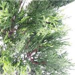 Leaf Arbre Artificiel Cèdre Conifère Topiary - Pot En Plastique Noir, 150cm Grand de la marque Leaf image 2 produit