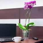 orchidée floraison TOP 6 image 2 produit