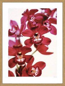 orchidée floraison TOP 7 image 0 produit
