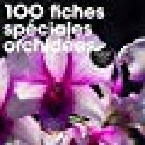 orchidée spéciale TOP 0 image 0 produit