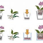 orchidée spéciale TOP 2 image 4 produit