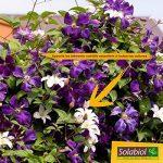 Solabiol SOLICOMP1 Engrais Complet Liquide 1L Prix Choc, Marron, 1 L de la marque Solabiol image 3 produit
