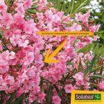 Solabiol SOLILAUR1N Engrais Lauriers et Bougainvilliers Liquide, Marron, 1 L de la marque Solabiol image 1 produit