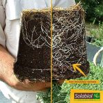 Solabiol SOSIRYL100N Stimulateur Racinaire Noir 100 ml de la marque Solabiol image 3 produit