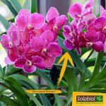 un orchidée TOP 9 image 2 produit